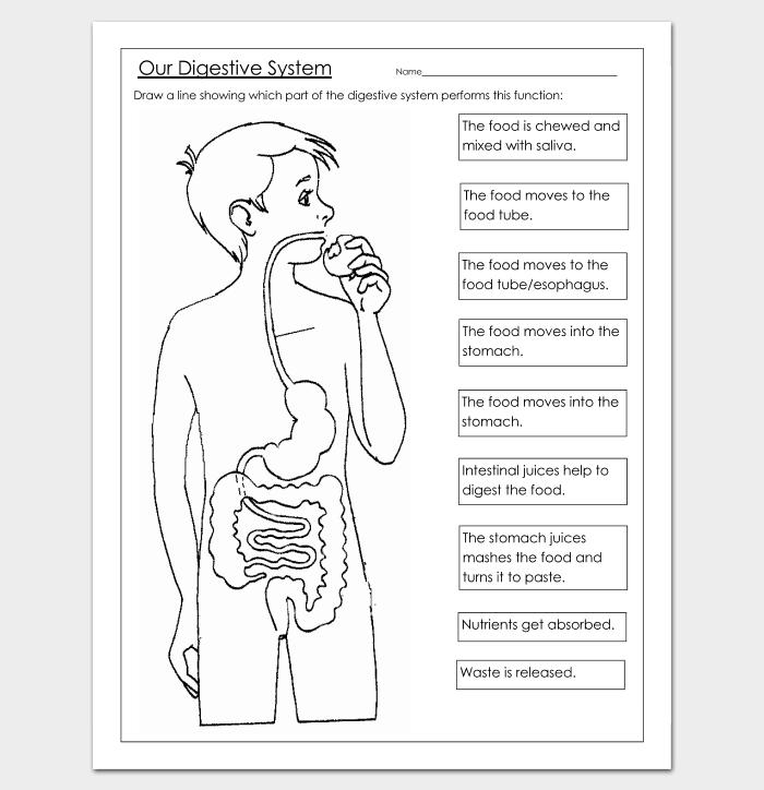 Human Body Outline Template - 32+ Printable Worksheets & Samples